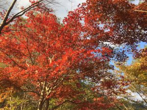 2016年11月6日 鳥取県日南湖 「kan」さん