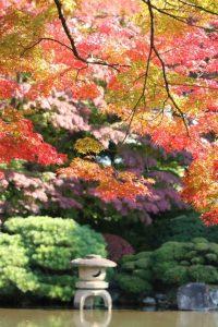 2016年11月5日 山形県もみじ公園 「桜のキャンディ」さん