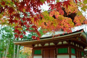 2016年11月6日 和歌山県高野山 「みゅう」さん